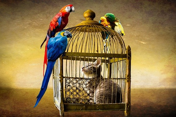 Selecting The Right Cage And Accessories