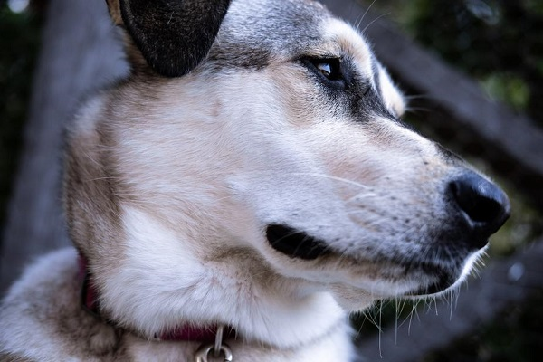 Recognizing And Managing Dog Aggression