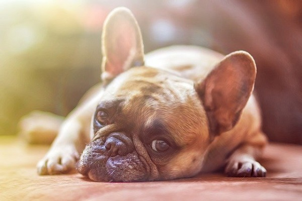 The Dos And Don'ts To Socializing Your Puppy As A Dog Trainer