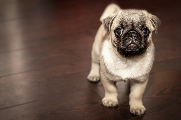 How To Have Success With Your Dog Behavior Training?