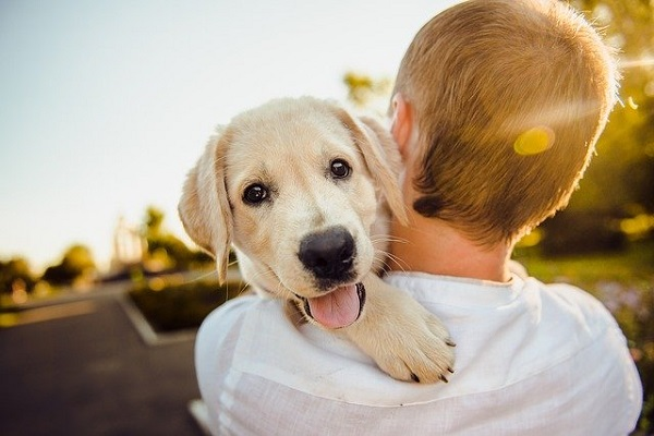Dog Training Techniques To Put An End To Excessive Barking
