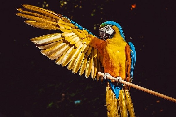 Parrot Diet - What To Feed And What Not To Feed Your Parrot