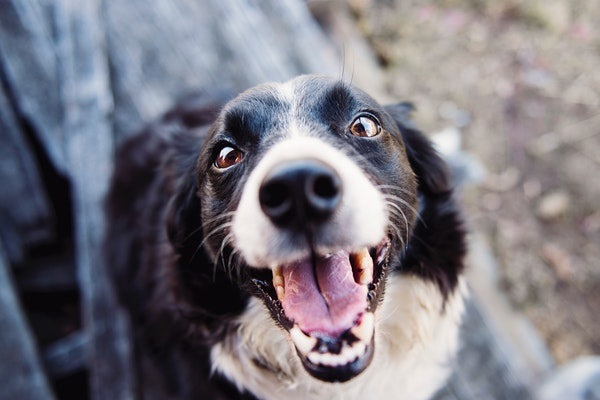 Understanding And Dealing With Barking Dogs