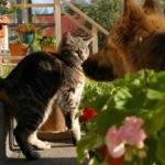 Fear May Be Keeping Your Cat Away From The Litter Box
