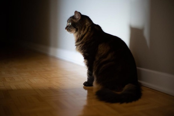 Urine Marking In Cats