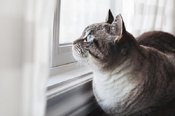 Is Your Cat Marking Your Home?