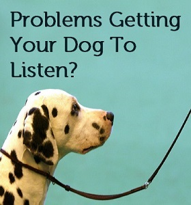 Problems Getting Your Dog To Listen