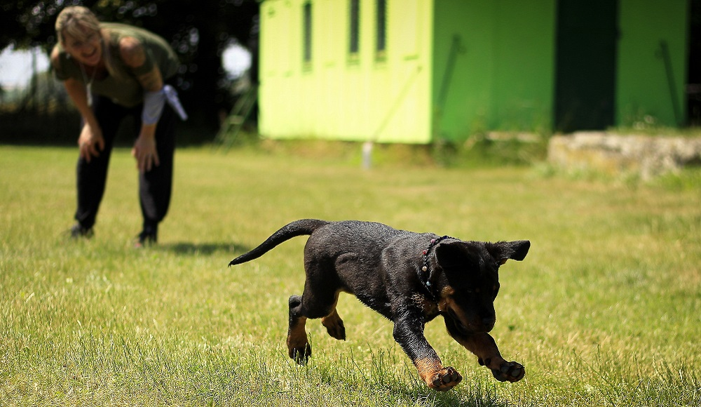Basic Dog Commands For Obedience