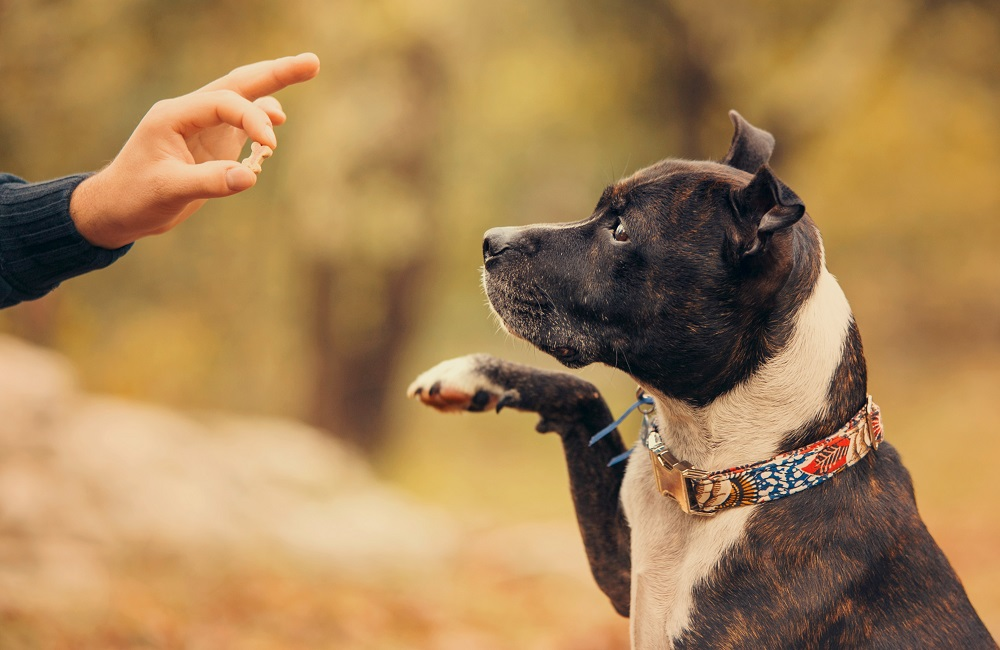Dog Obedience - Guide To Behaviour Training