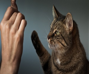 Problems Getting Your Cat To Stop Spraying?